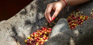 Colombian Coffee - Beans